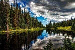 natur_skov_vand