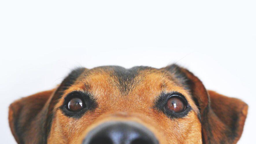 en sød hund