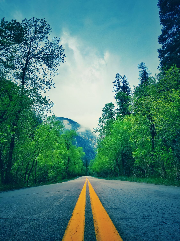 Vej med grønne træer