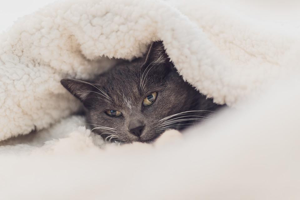 kat under dyne