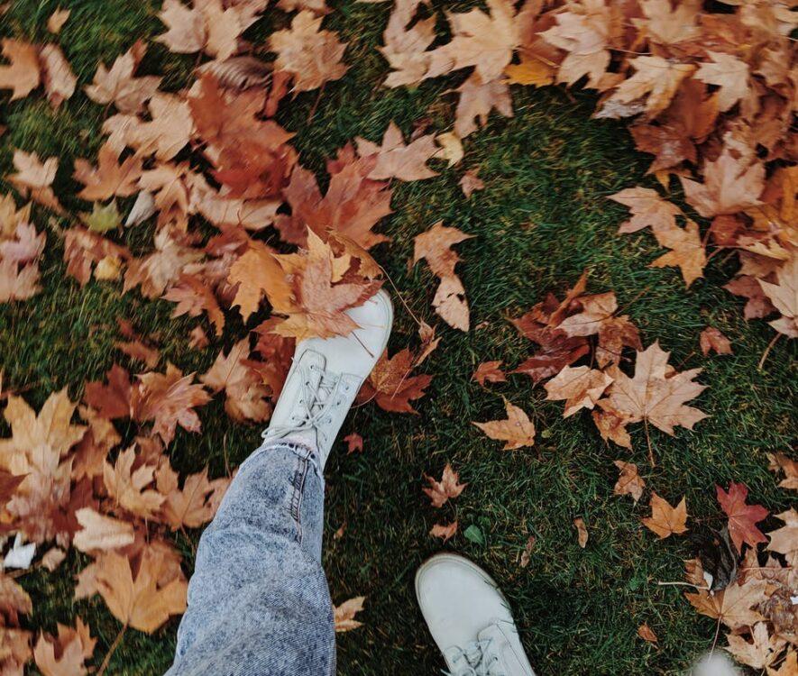 blade og efterår