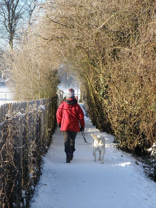 Hundelufter i vintervejr