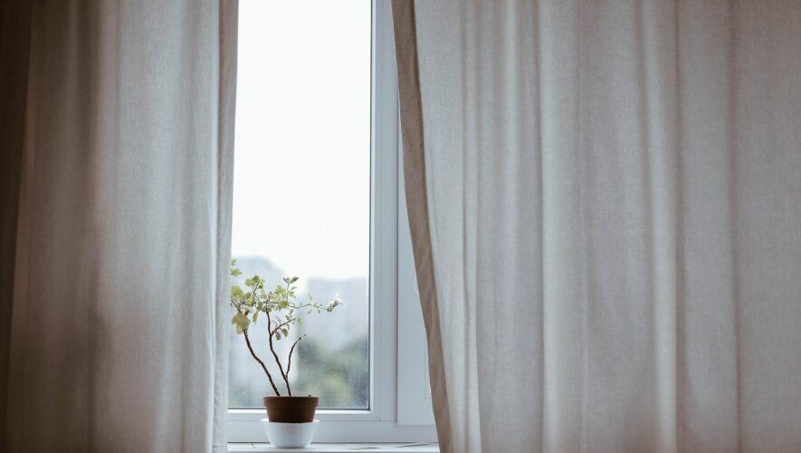 Plante i vindue